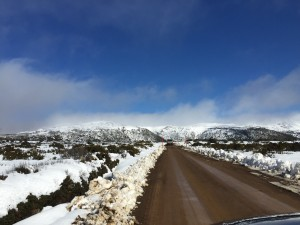 Road to Lake Dobson across Wombat Moor - Open and Clear